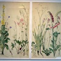 Skiss till skåpdörrar 1940-tal. En blomsterhyllning till Carl von Linné. Norrköpings Konstmuseum 2007. Foto Maria Tarkpea